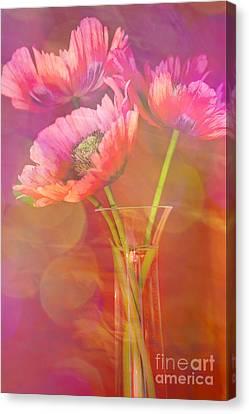 Poppy Passion Canvas Print by Jan Bickerton