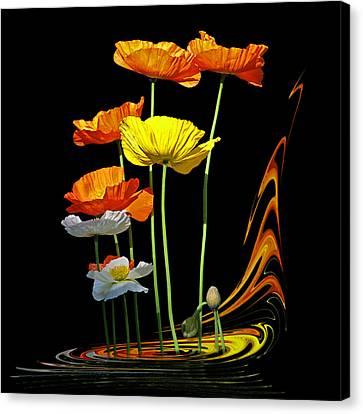 Poppy Pirouette Canvas Print by Gill Billington