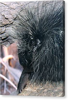 Porcupine Canvas Print by Kume Bryant