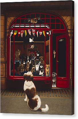 Portal Pet Show, 1993 Oils & Tempera On Panel Canvas Print by Frances Broomfield