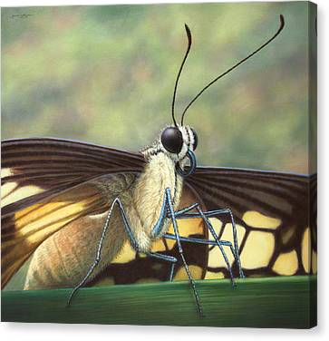 Portrait Of A Butterfly Canvas Print by James W Johnson
