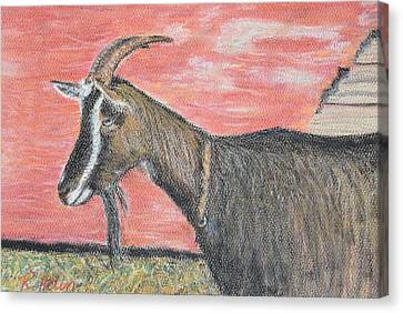 Portrait Of A Goat Canvas Print by Renee Helin