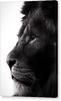 Portrait Of A Lion Canvas Print by Martin Newman