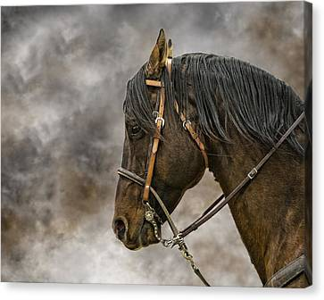 Portrait Of A Rope Horse Canvas Print by Jana Thompson