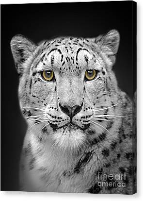 Portrait Of A Snow Leopard Canvas Print by Linsey Williams