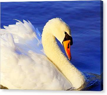 Portrait Of A Swan Canvas Print by Aurelio Zucco