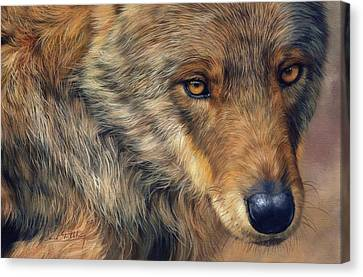 Portrait Of A Wolf Canvas Print by David Stribbling