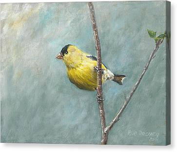 Portrait Of An American Goldfinch Canvas Print by Rob Dreyer AFC