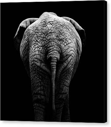 Portrait Of Elephant In Black And White II Canvas Print by Lukas Holas
