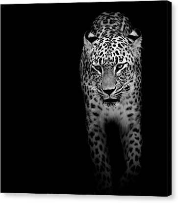 Portrait Of Leopard In Black And White II Canvas Print by Lukas Holas