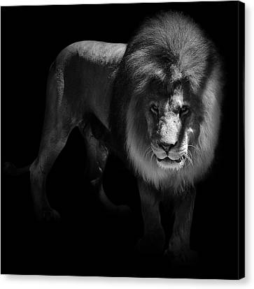 Portrait Of Lion In Black And White Canvas Print by Lukas Holas