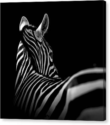 Portrait Of Zebra In Black And White II Canvas Print by Lukas Holas