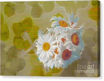 Pot Of Daisies 02 - S13ya Canvas Print by Variance Collections