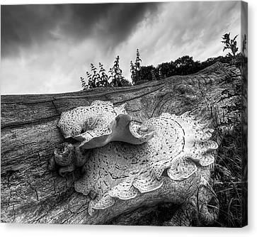 Pot Of Gold - Glowing Fungi Bw Canvas Print by Gill Billington