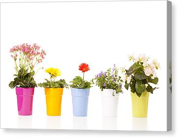 Potted Flowers Canvas Print by Alexey Stiop