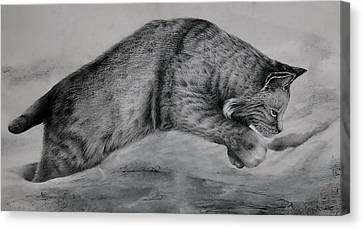 Pounce Canvas Print by Jean Cormier