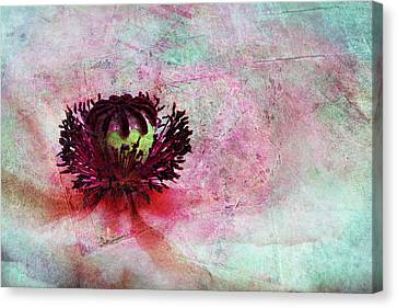 Power Of Poppy Canvas Print by Claudia Moeckel
