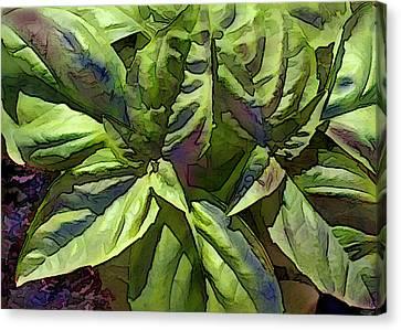 Pre Pesto Plant Canvas Print by Elaine Plesser