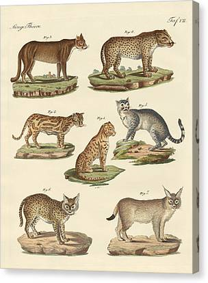 Predators From All Parts Of The World Canvas Print by Splendid Art Prints