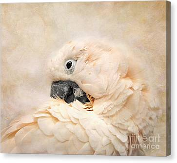 Preening Canvas Print by Jai Johnson