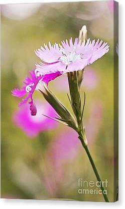 Pretty In Pink Canvas Print by Pamela Gail Torres