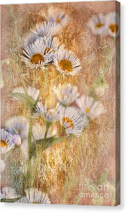 Pretty Little Weeds IIi Canvas Print by Debbie Portwood