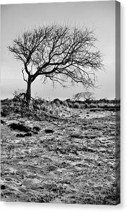 Prevailing Bw Canvas Print by JC Findley