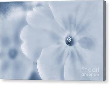 Primrose Cyanotype Canvas Print by John Edwards