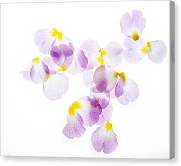 Primrose Petals 4 Canvas Print by Rebecca Cozart