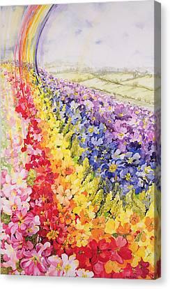 Primrose Rainbow Canvas Print by Joan Thewsey