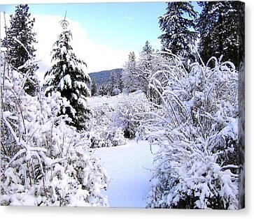 Pristine Winter Trail Canvas Print by Will Borden