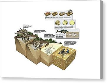 Process Of Fossilization Canvas Print by Jose Antonio Pe�as