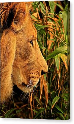 Profiles Of A King Canvas Print by Laddie Halupa