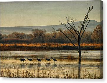 Promenade Of The Cranes Canvas Print by Priscilla Burgers