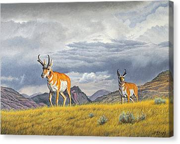 Pronghorn-coming Over The Rise Canvas Print by Paul Krapf