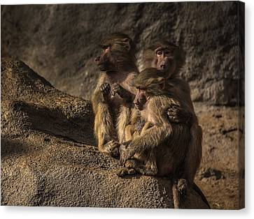 Protection From The Family Canvas Print by Chris Fletcher