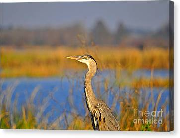 Proud Profile Canvas Print by Al Powell Photography USA