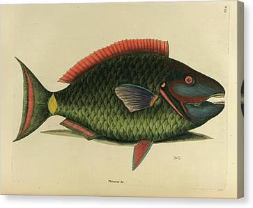 Psittacus Piscis Viridis Canvas Print by British Library