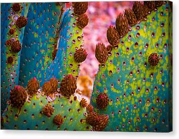 Psychedelic Cactus Canvas Print by Glenn DiPaola