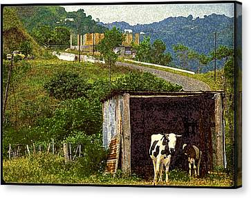 Puerto Rico Countryside Canvas Print by Ed Hoppe