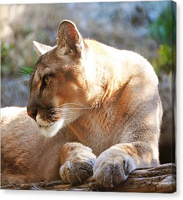 Puma 3 Canvas Print by DiDi Higginbotham