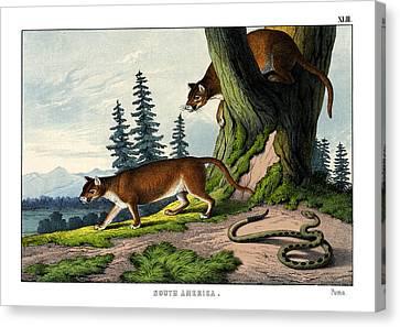 Puma Canvas Print by Splendid Art Prints