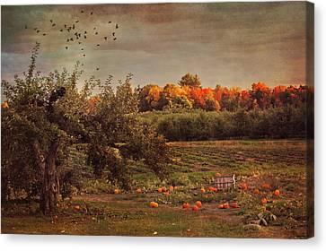 Pumpkin Patch In Autumn Canvas Print by Joann Vitali