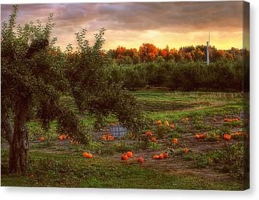 Pumpkin Patch Canvas Print by Joann Vitali