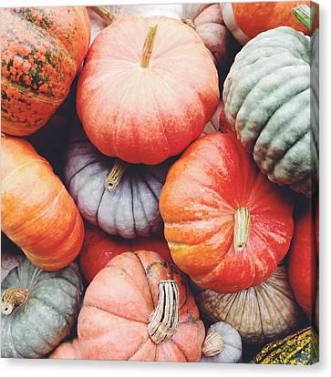 Pumpkins Galore Canvas Print by Kim Fearheiley
