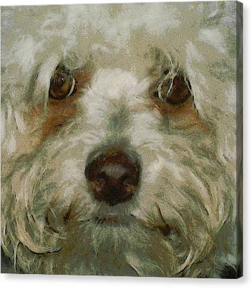 Puppy Eyes Canvas Print by Ernie Echols