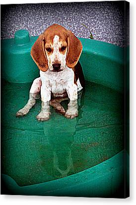 Puppy Refection  Canvas Print by Lynn Griffin