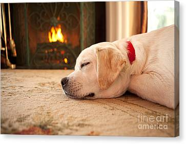 Puppy Sleeping By A Fireplace Canvas Print by Diane Diederich