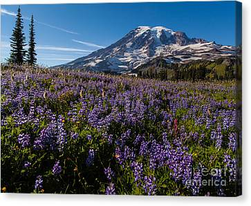 Purple Fields Forever And Ever Canvas Print by Mike Reid