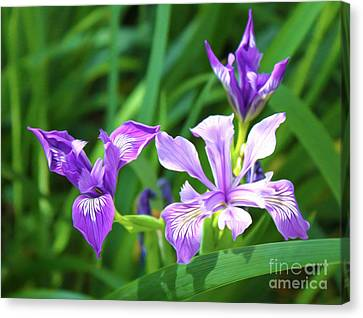 Purple Flower Canvas Print by Gregory Dyer